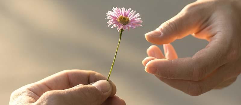 Hands passing a flower