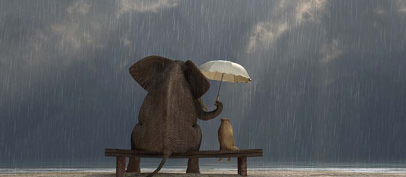 elephant holding umbrella over dog - both sitting on bench in the rain