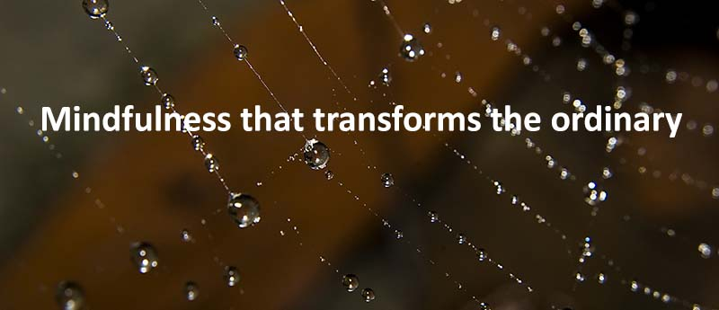 Mindfulness that transforms the ordinary (dew on spiderweb)
