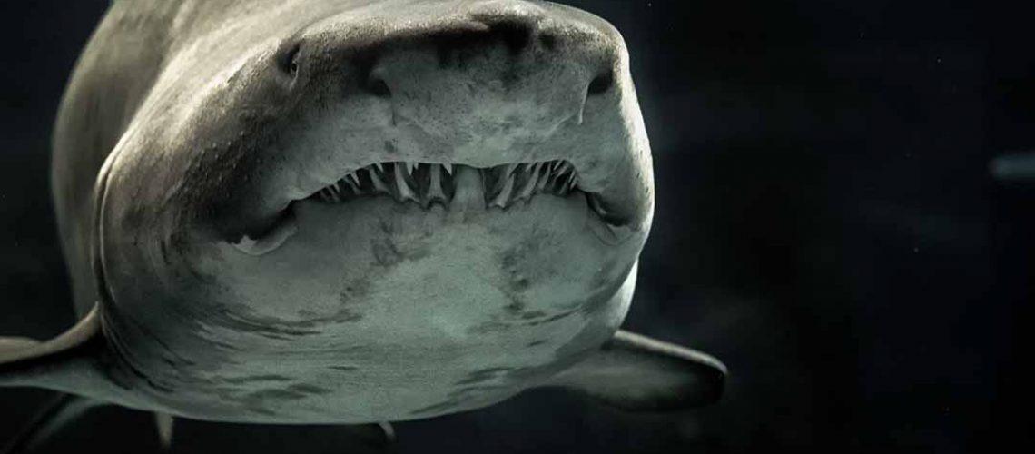 shark in dark water